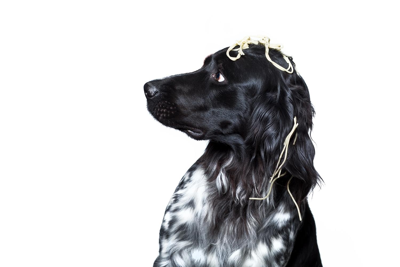 osnabrueck-hundefotografie-studiofotografie-spaghetti