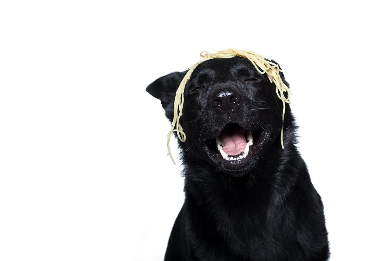 spaghetti-hundefotografie-studiofotografie-duesseldorf