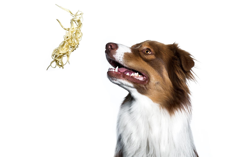 studiofotografie-spaghetti-hunde-bilder-warendorf
