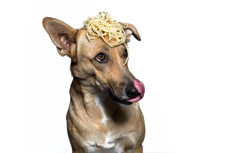 tierfotografie-spaghetti-bella-luna-hundefotografie-muenster