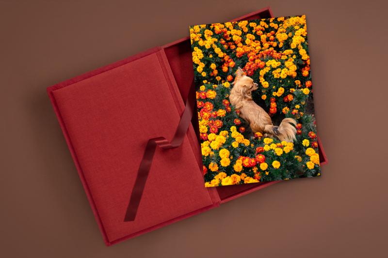 rote Foliobox mit Hundefotografie eines Chihuahuas